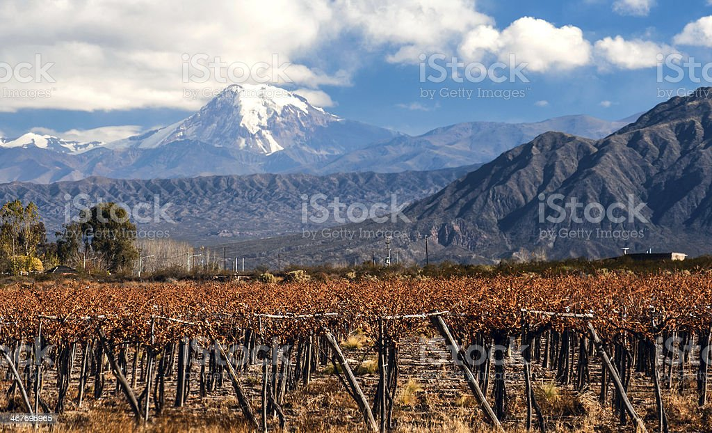 A view of Volcano Aconcagua in Mendoza and vineyards below stock photo