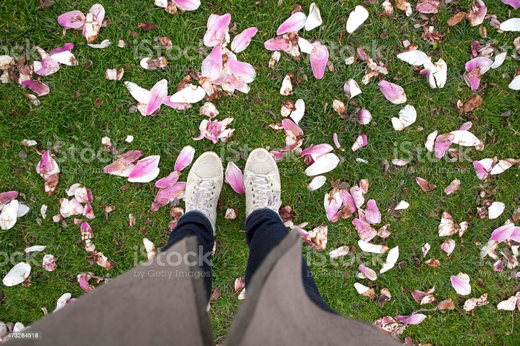 View of woman's feet walking amongst magnolia blossoms stock photo