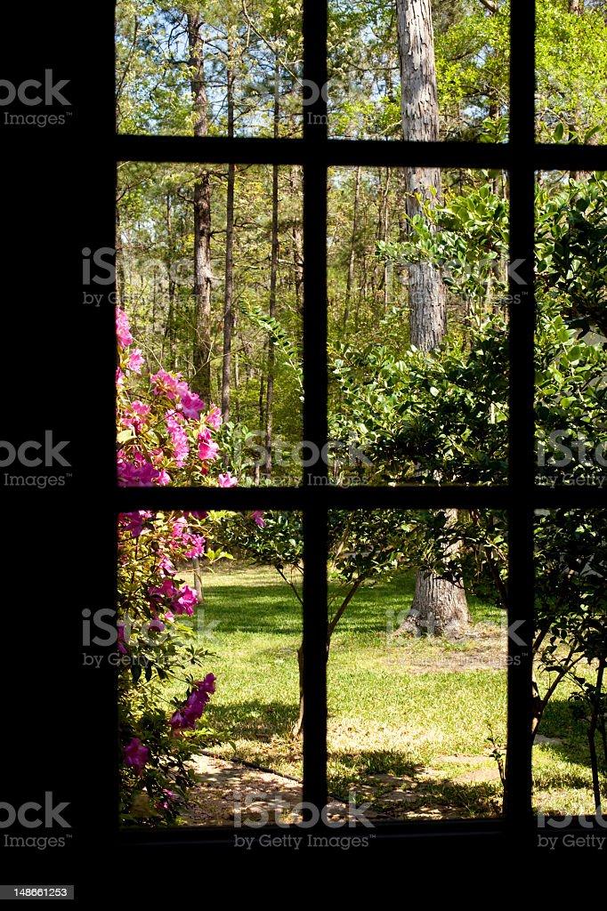 View of yard and azaleas through the window royalty-free stock photo