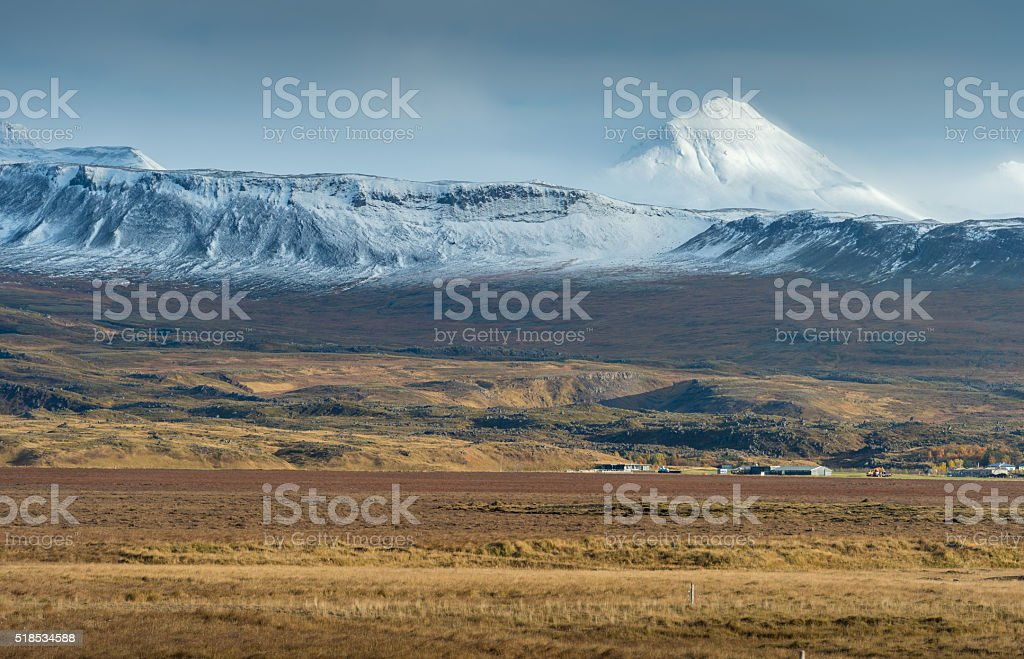 View of yellow field with snow mountain range background stock photo