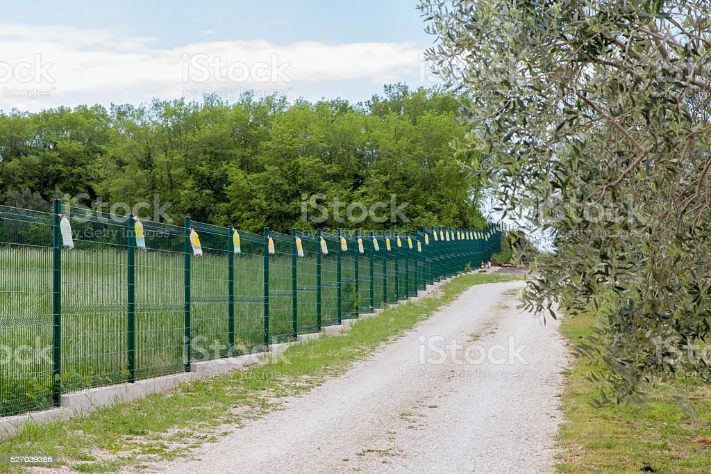 View on a large organic olive  grove stock photo
