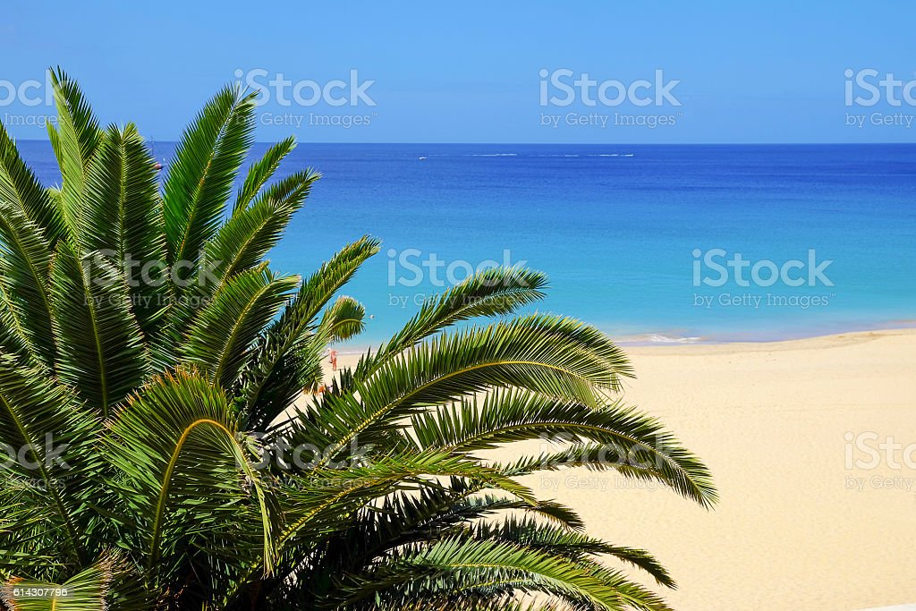 View on a palm and a beach on the background. stock photo