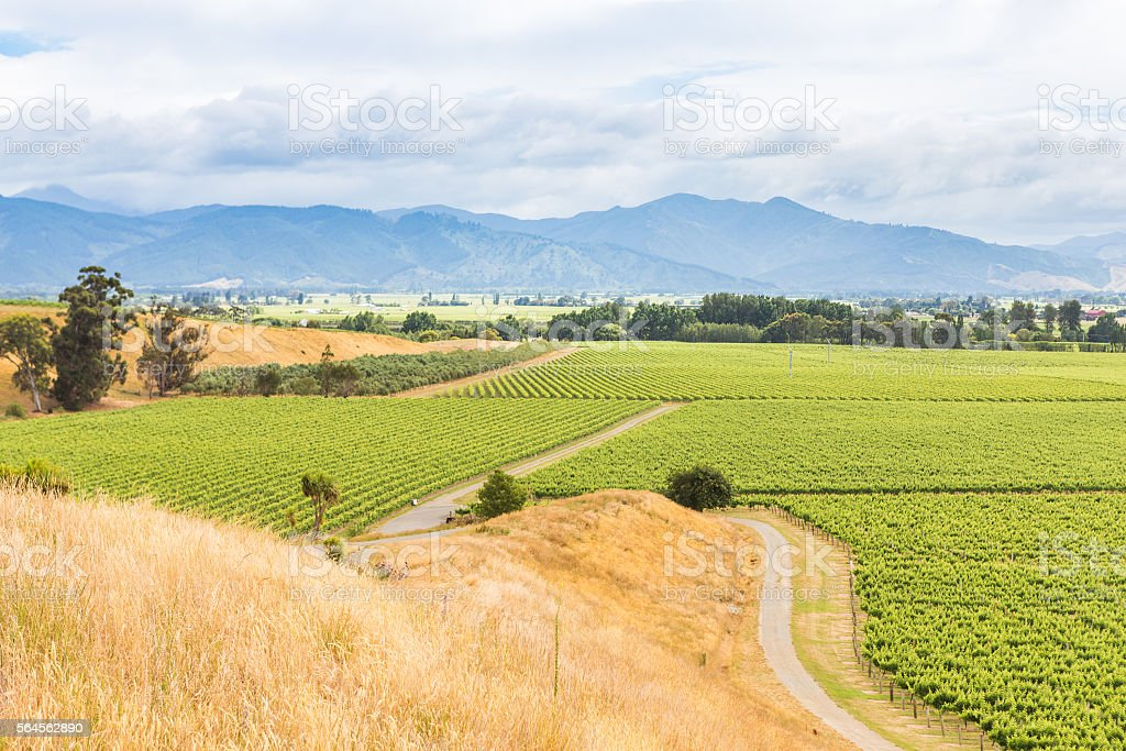 View on a vineyard and the distant mountains stock photo