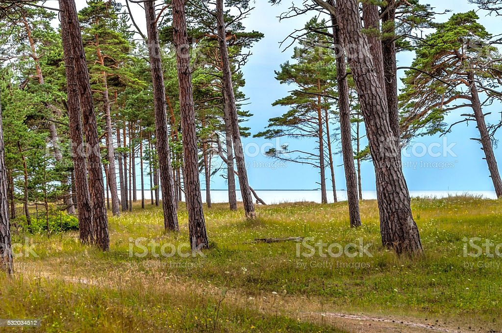 View on beach from forest stock photo