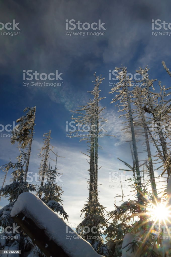 view on deadwood in winter by Harz mountain stock photo