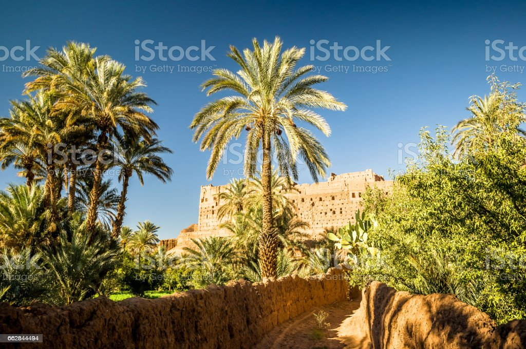 View on green palm garden in Draa valley in Morcooco stock photo