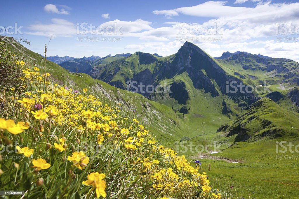 view on mt. rote spitze, tannheimer berge, tirol, austria stock photo
