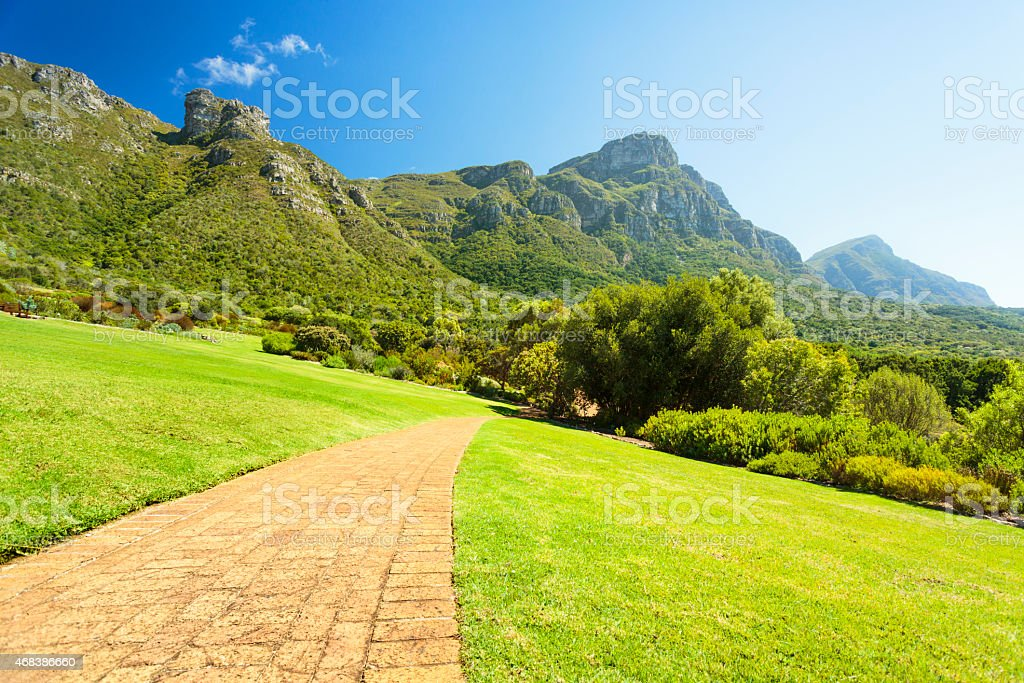 View on Table Mountain from Kirstenbosh botanical garden, Cape Town. stock photo