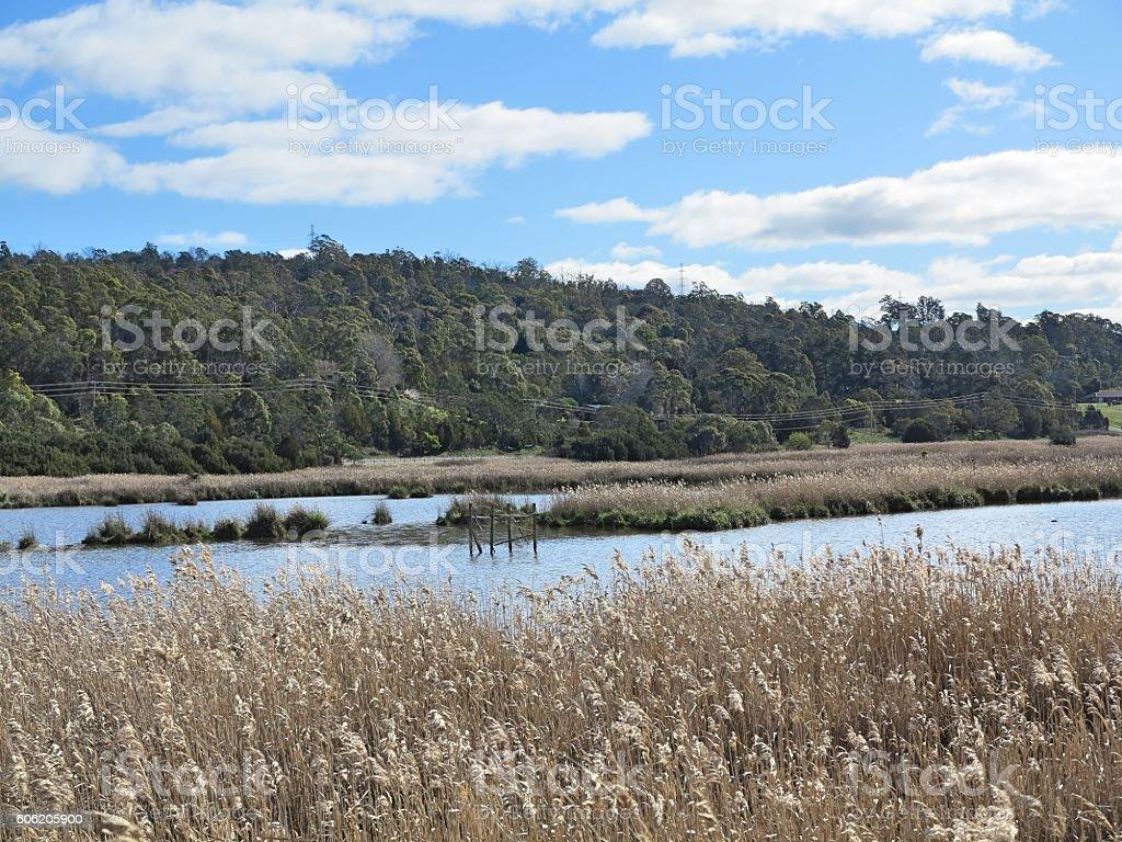 View on Tamar Island Wetland stock photo