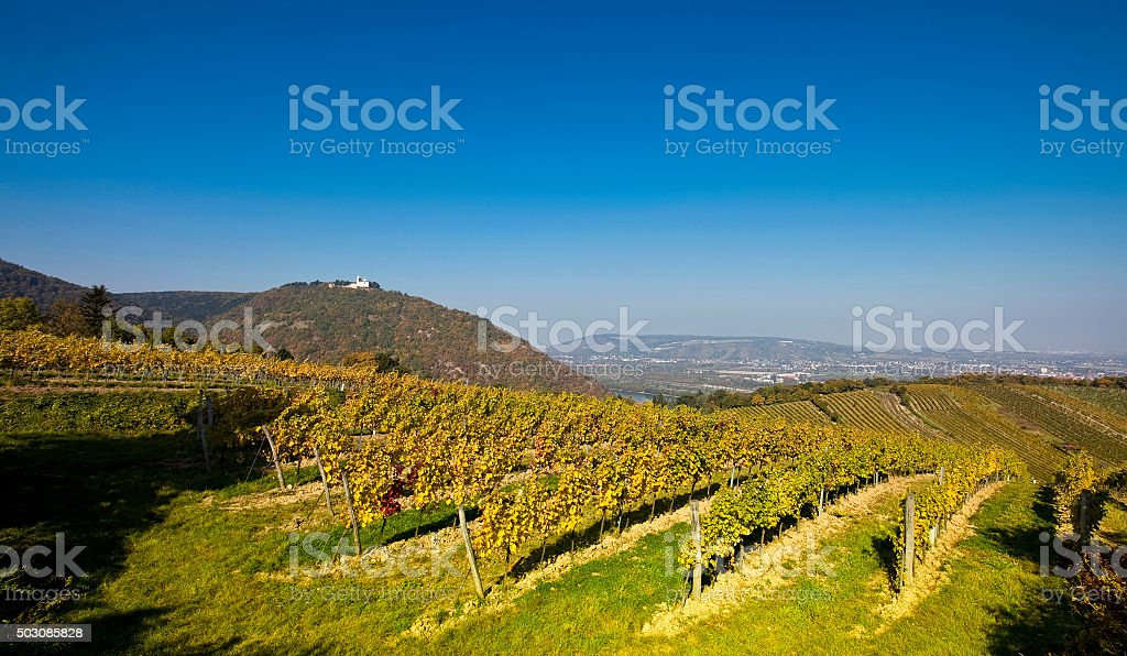 View on the Leopoldsberg Church and Danube from Viennese vineyard stock photo