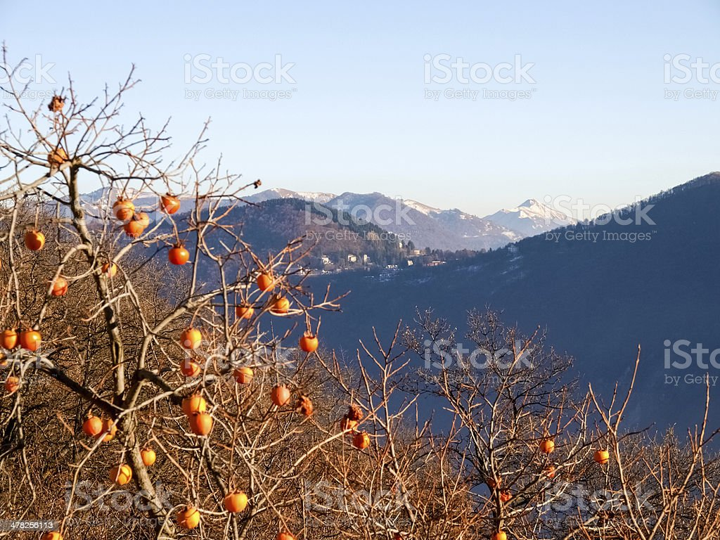 View on the mountains stock photo