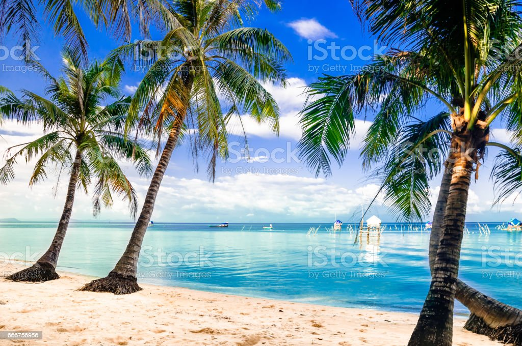 View on turquoise palm beach by Phu quoc island in Vietnam stock photo