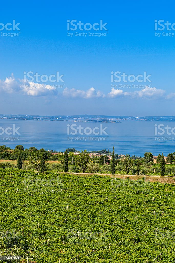 View on Vineyards and Lake Garda, Italy stock photo