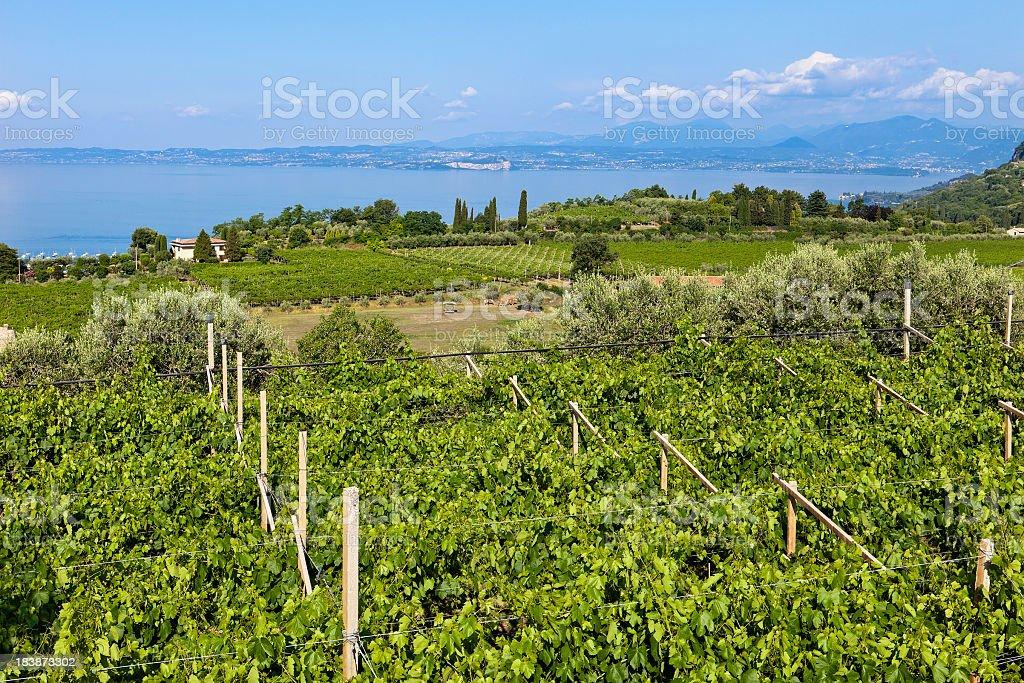 View on Vineyards and Lake Garda, Italy royalty-free stock photo