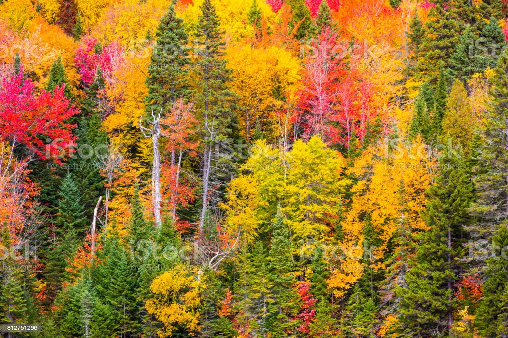 A view one of La Mauricie National Park's forests with its Autumn colors, in the Canadian province of Québec. stock photo