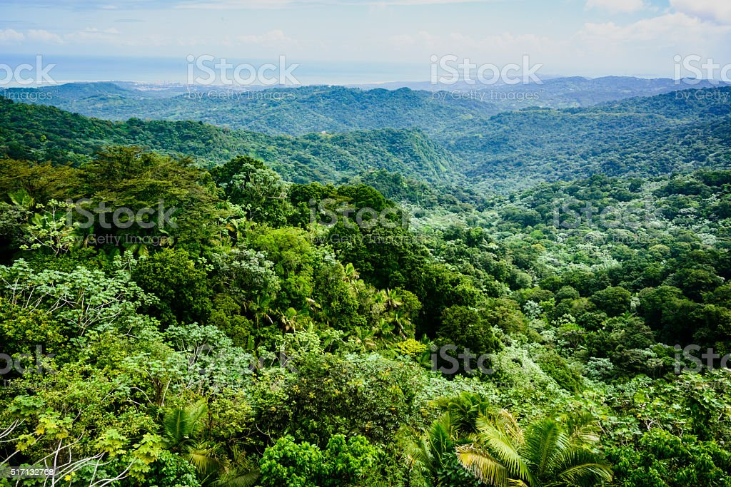 View over a rainforest, El Yunque, Puerto Rico stock photo