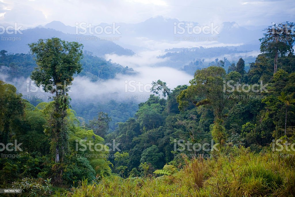 A view over a rainforest from above the canopy and clouds stock photo