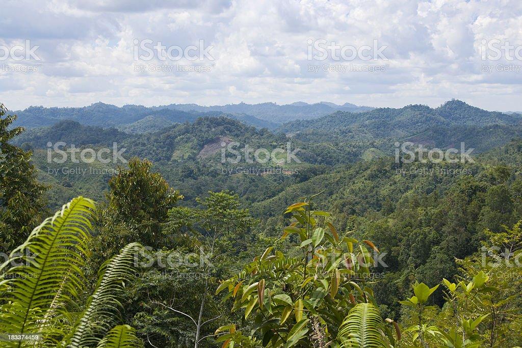 View over jungle in Borneo, Malaysia stock photo