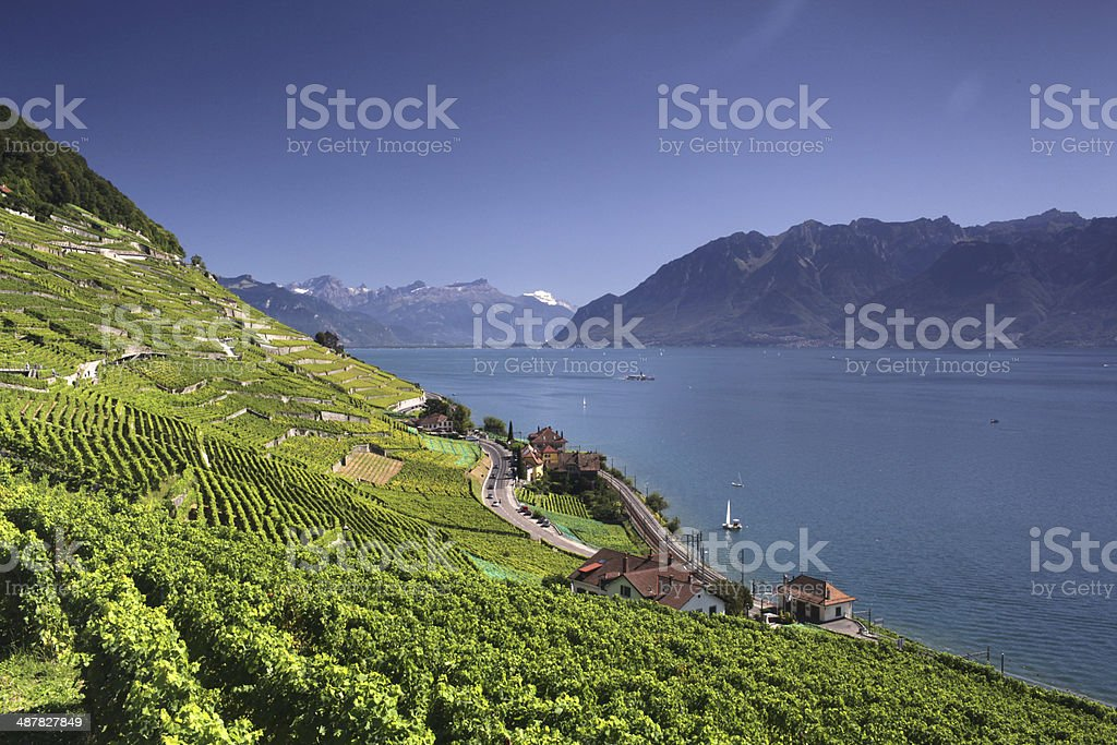 View Over Lake Geneva From the Lavaux Vines stock photo