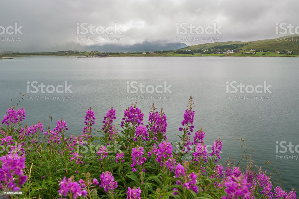 View over Nappstraumen stock photo