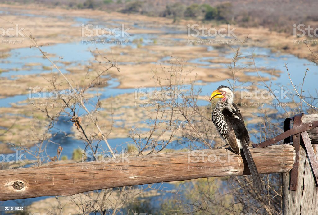 View over Olifants River, Kruger National Park, South Africa stock photo