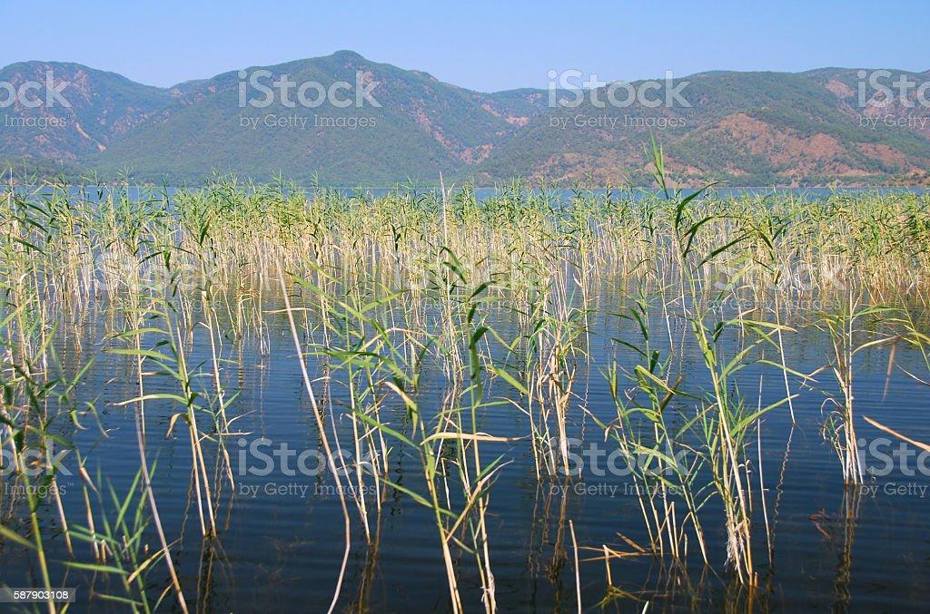 View over the Lake Köyceğiz and Akdağ mountains. stock photo