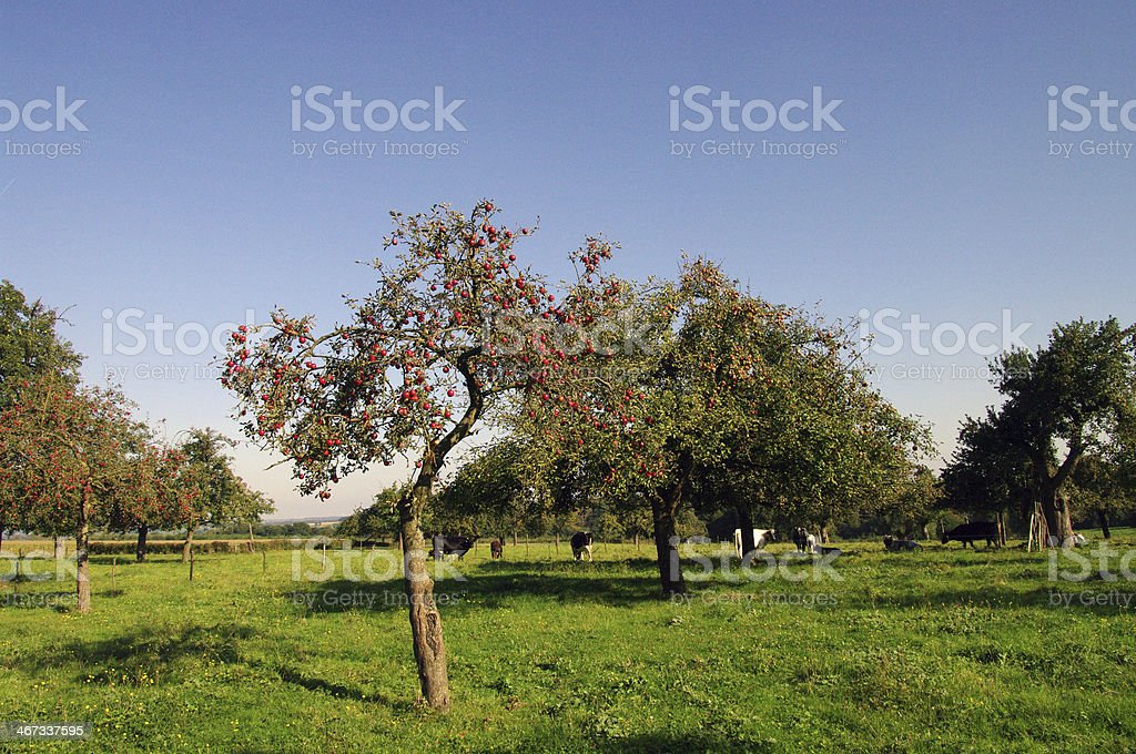 View over the Orchard royalty-free stock photo