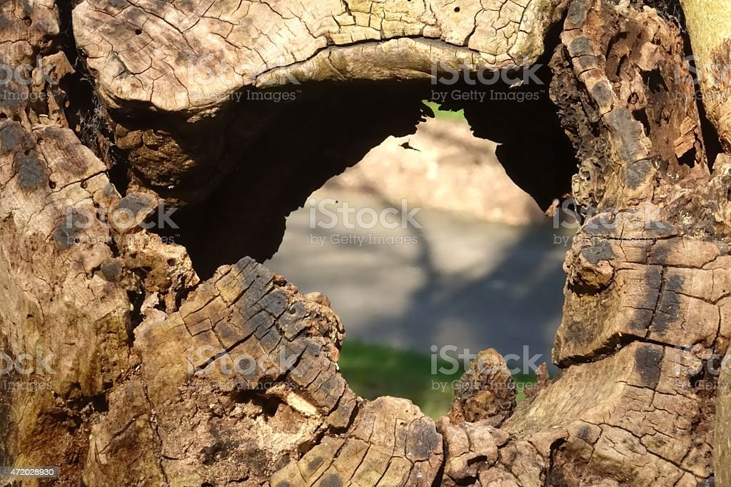 View through a hole of a tree stock photo