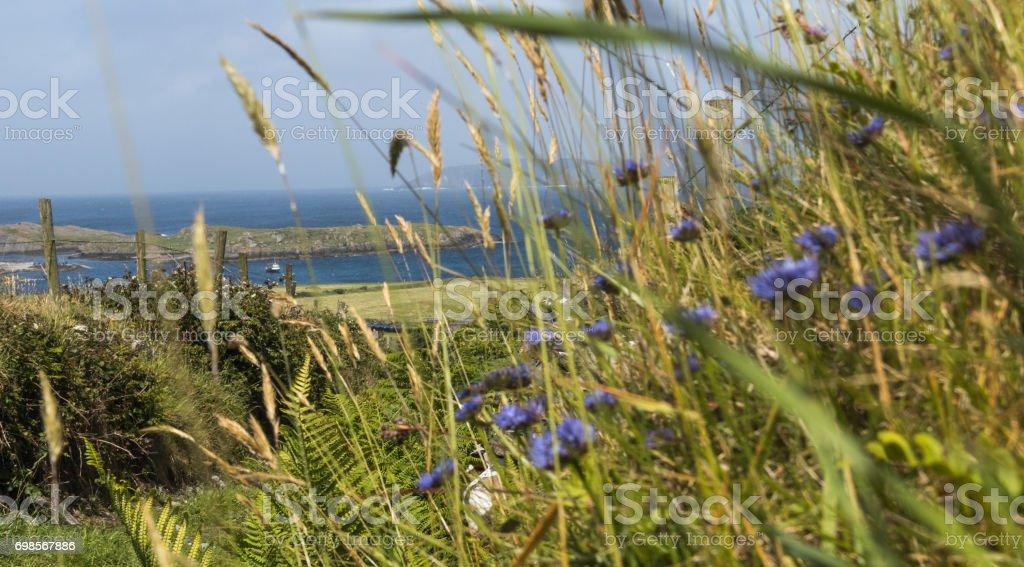 View through Cornflowers stock photo