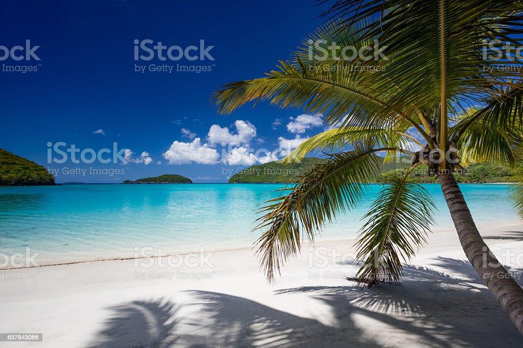 View through palm tree's at Maho Bay Beach, St John stock photo