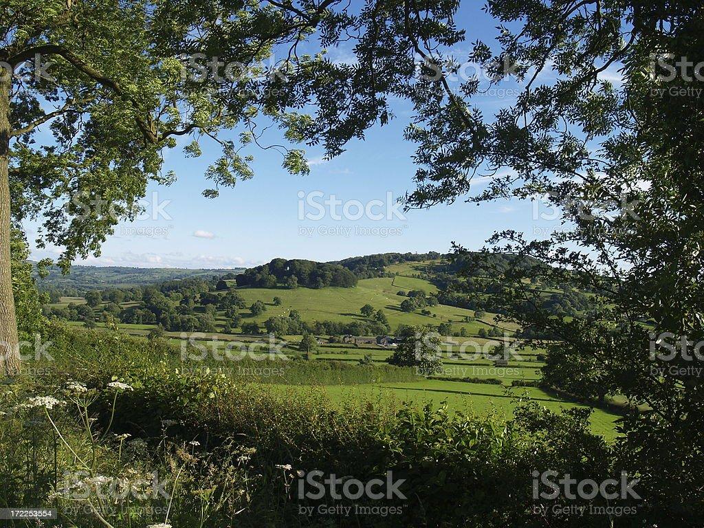 View through the trees stock photo