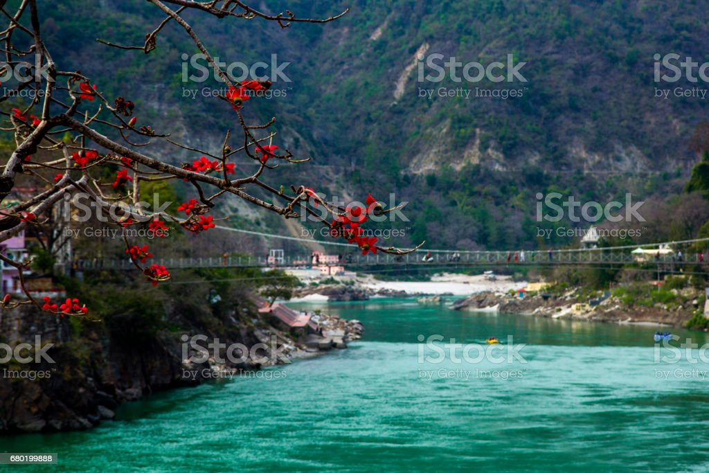 RISHIKESH, INDIA - view to Ganga river and lakshman jhula from cafe under magnolia tree stock photo