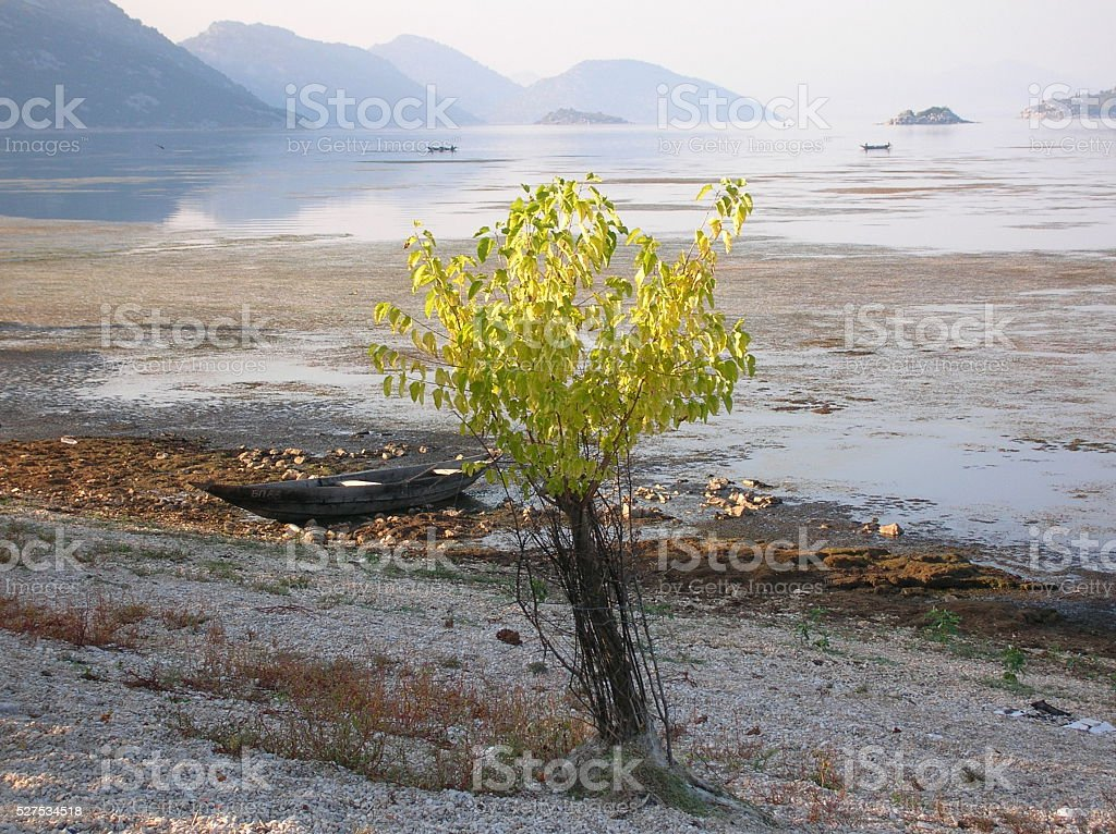 view to Skadar Lake wooden boat and a tree stock photo