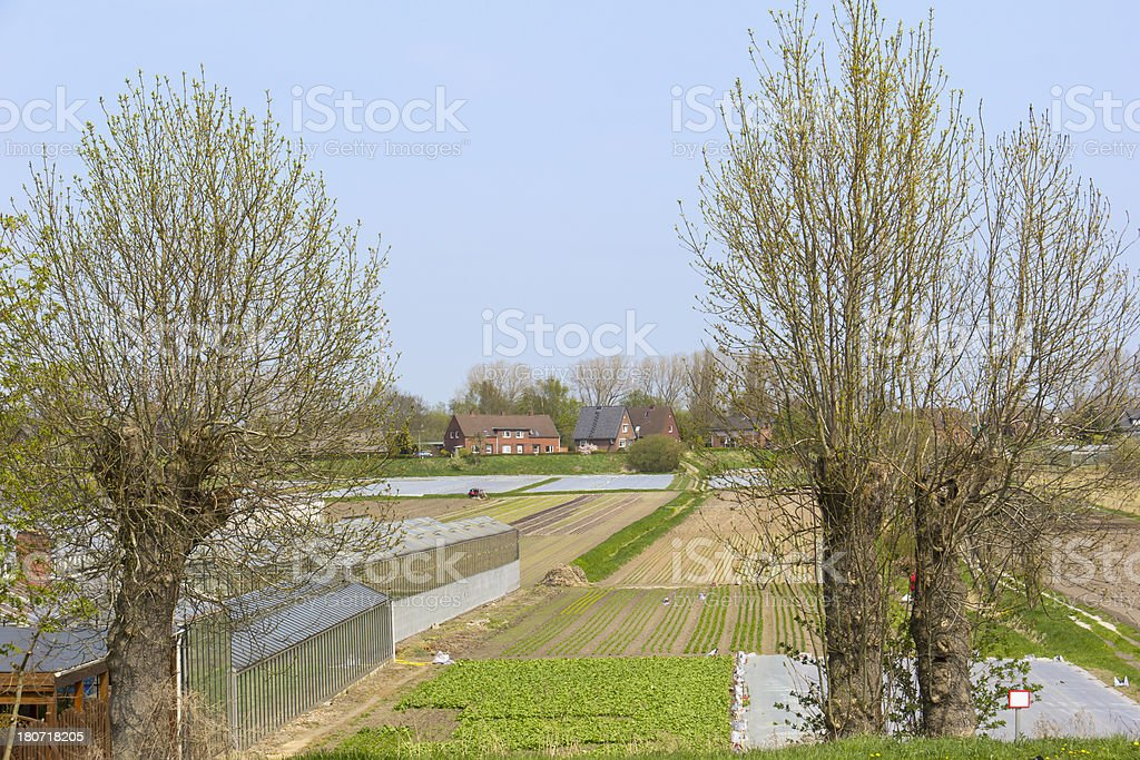 View to the fields with lettuce stock photo