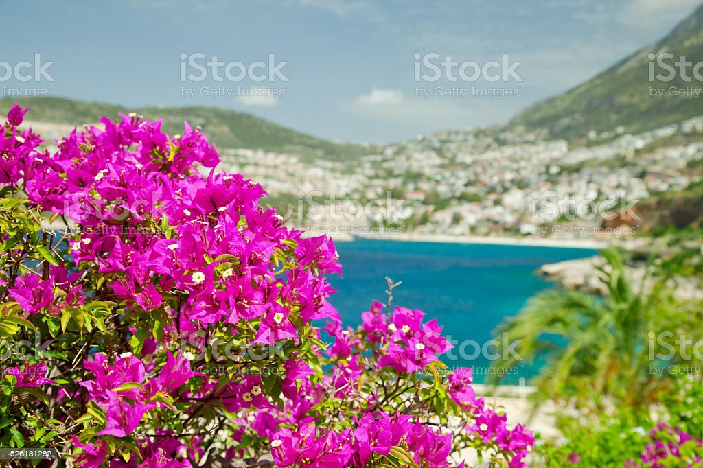 View to town Kalkan behind the Bougainvillea, Mediterranean Co stock photo