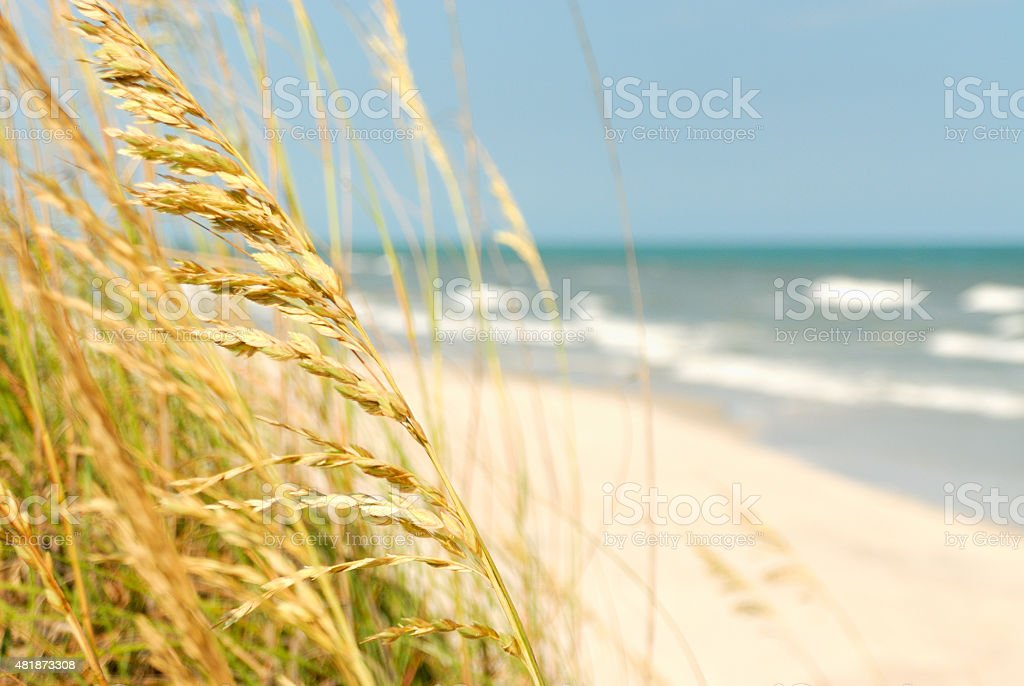 View up the beach with sea oats in the foreground stock photo