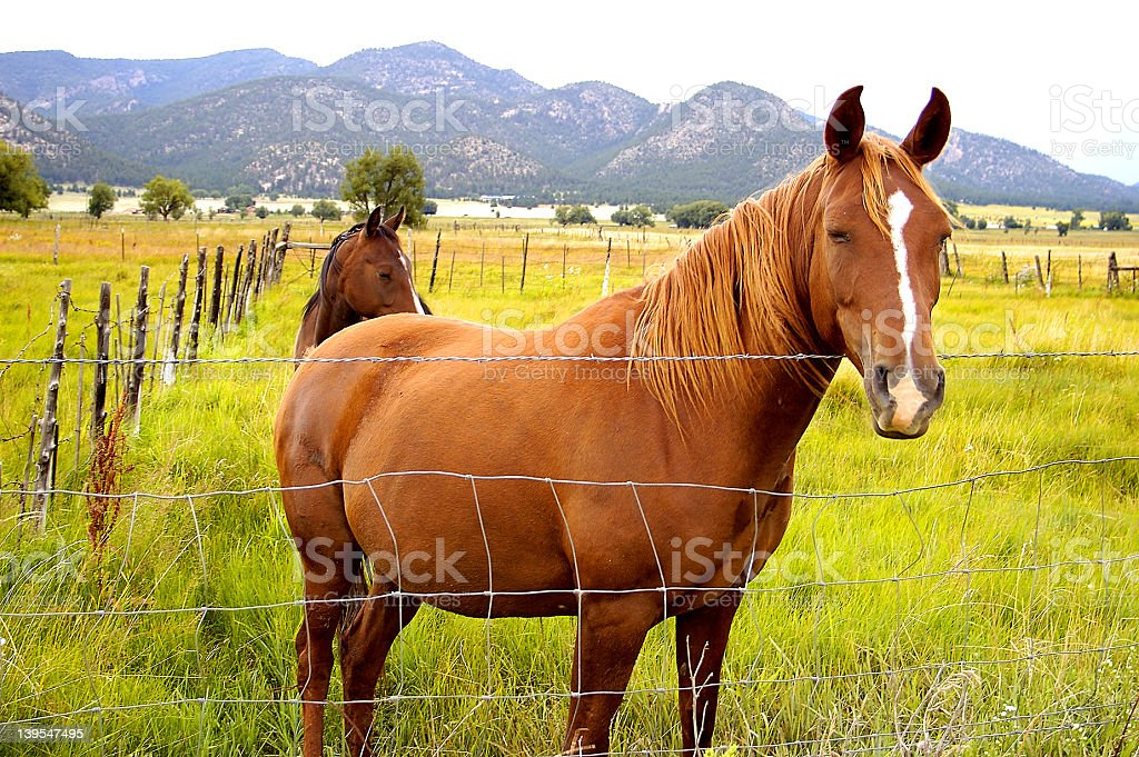 Views from New Mexico royalty-free stock photo