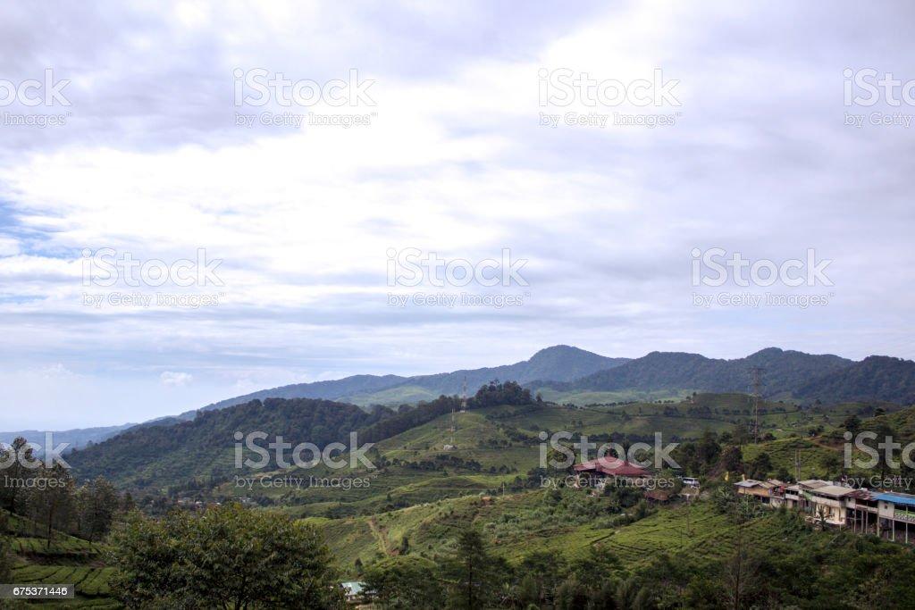 Views of the tea garden stock photo