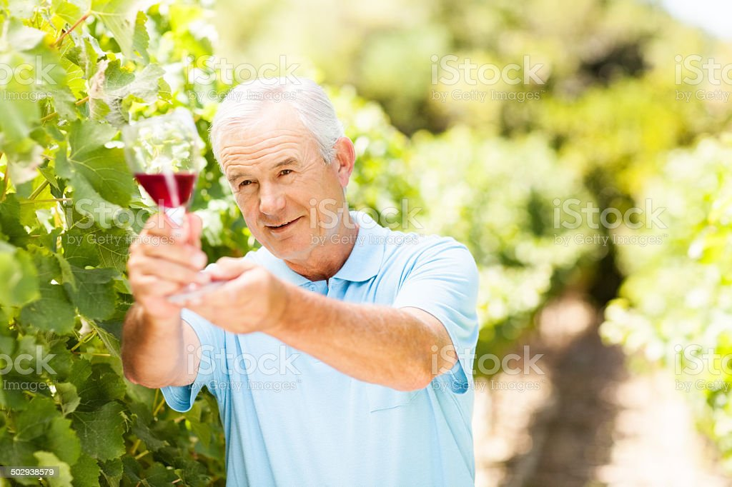 Vigneron Examining Red Wine In Glass At Garden royalty-free stock photo