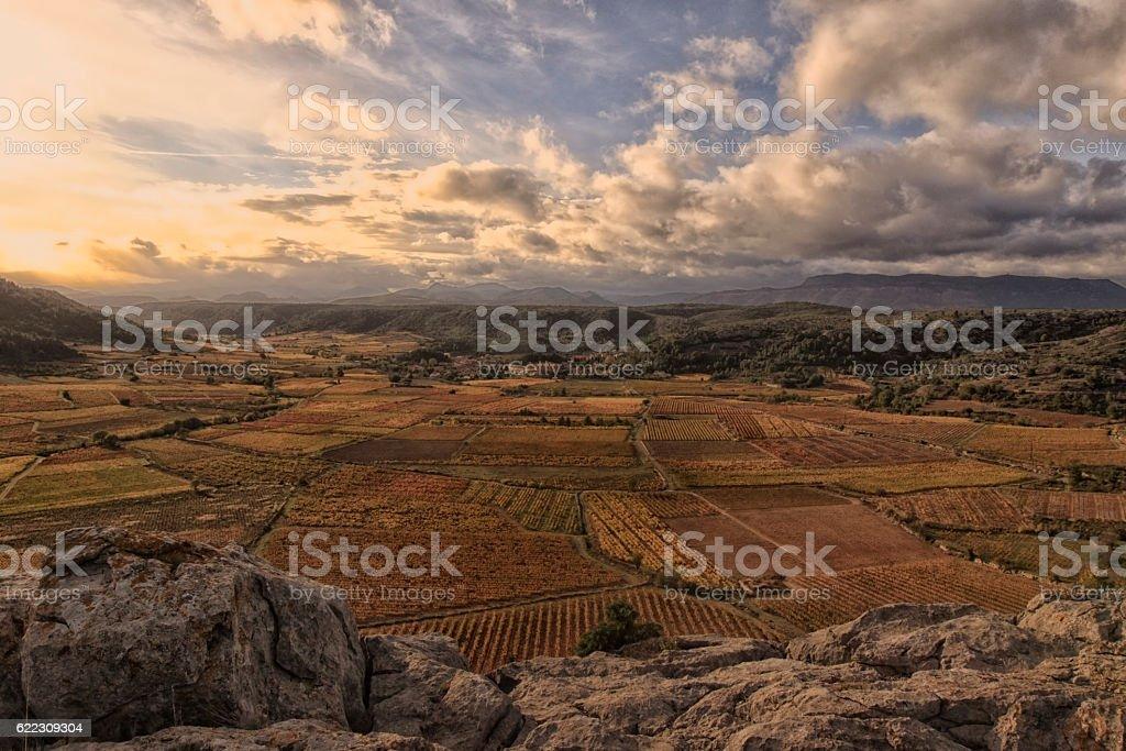 Vignes de Vingrau stock photo
