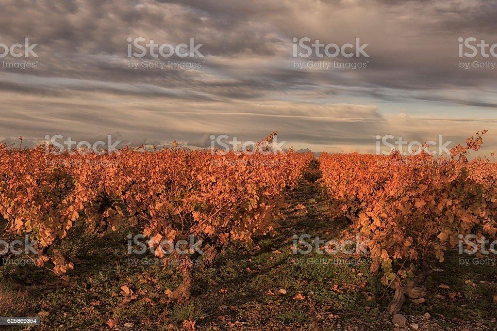 Vignes en automne stock photo