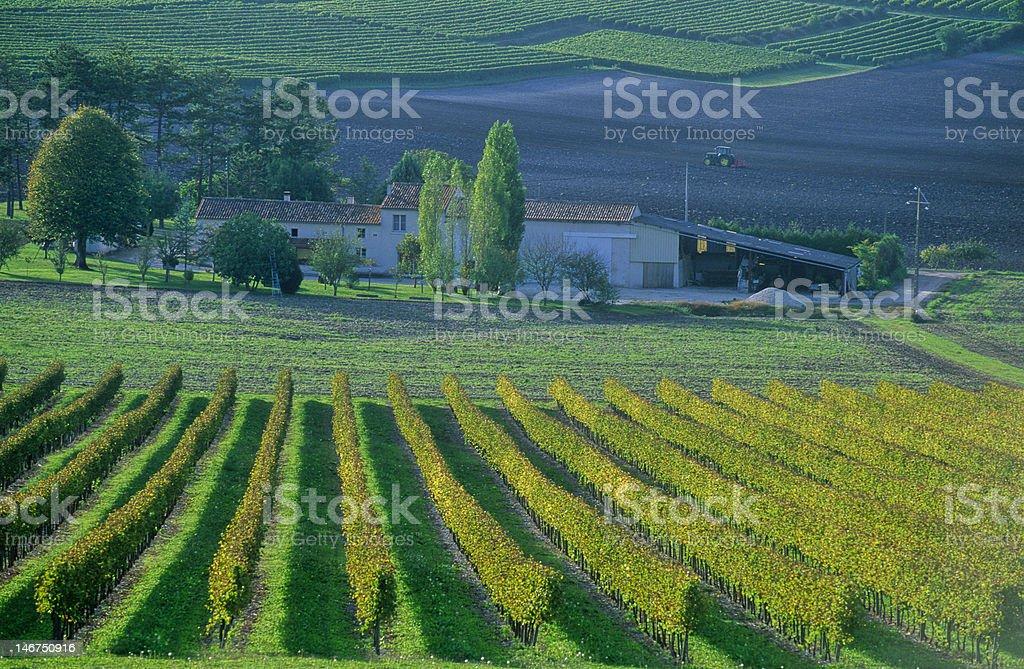 vignoble de cognac stock photo