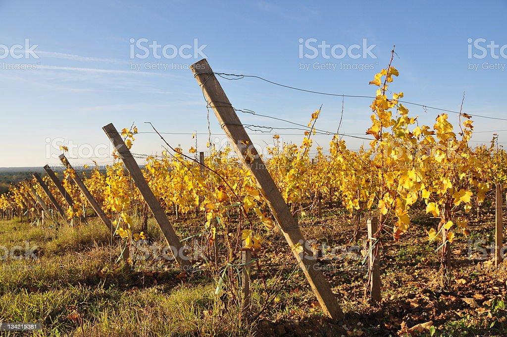 vignobles ? Bordeaux stock photo