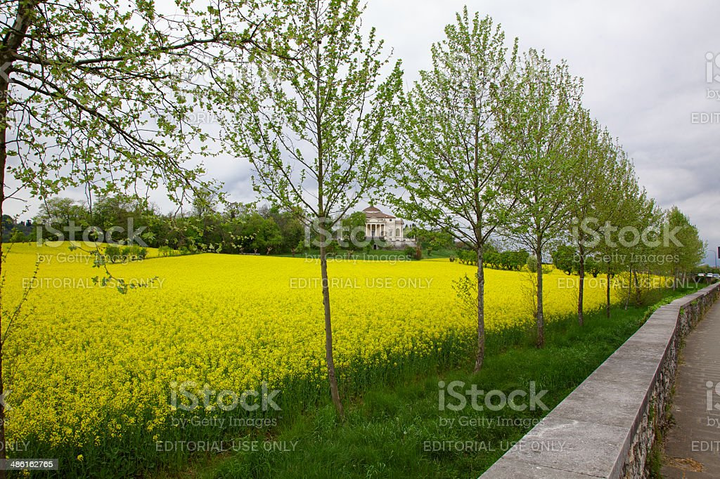 Villa 'La Rotonda' sorrounded by yellow rapeseed flowers. Vicenza-Italy. royalty-free stock photo