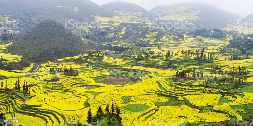 Village and Rapeseed Field stock photo