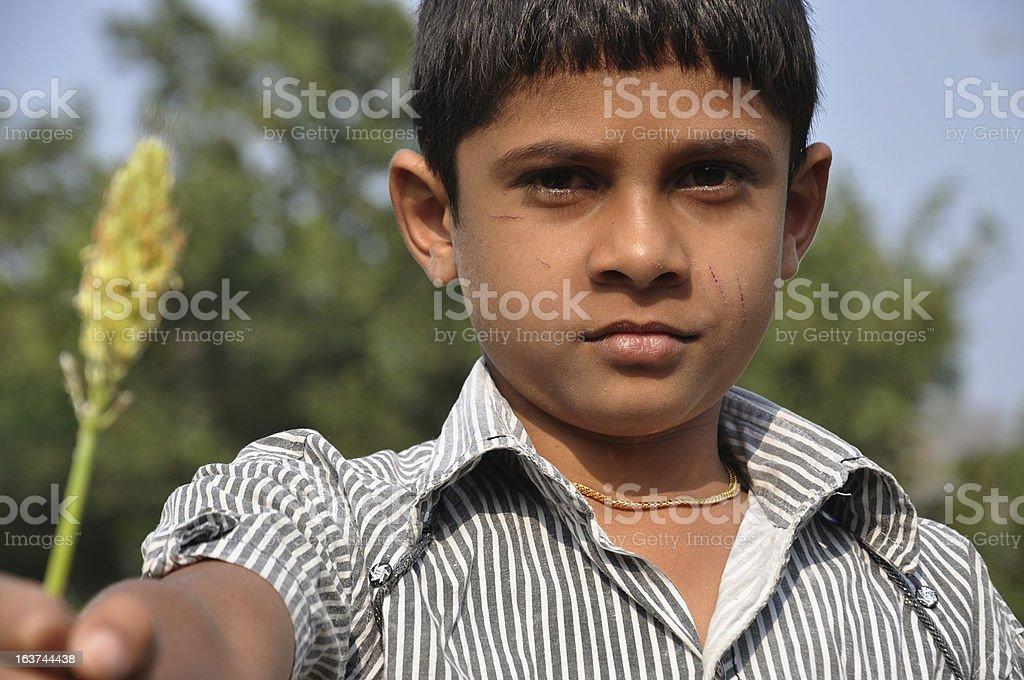 Village boy holding crop royalty-free stock photo