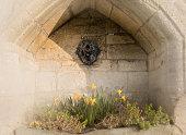 Village daffodils in stone flowerbed