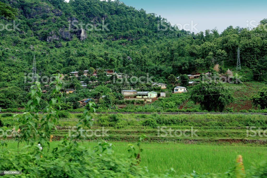 A village near Guwahati sarrounded with Coconut, Banana and Betel tree stock photo