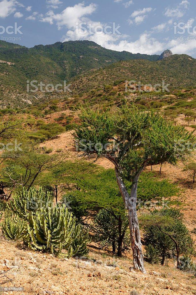 Village of South Horr in Kenya stock photo