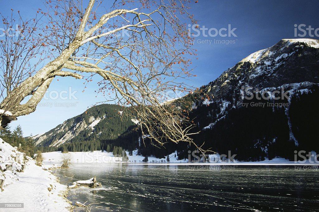 Vils alp lake in winter royalty-free stock photo